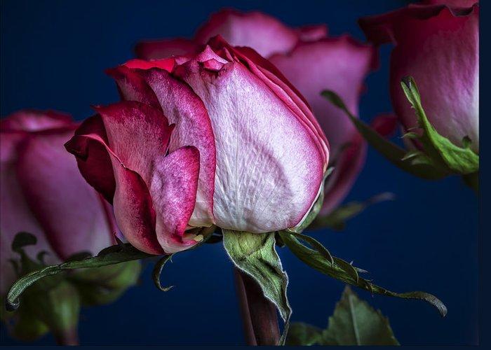 Rose Still Life Greeting Card featuring the photograph Rose Still Life by Robert Ullmann