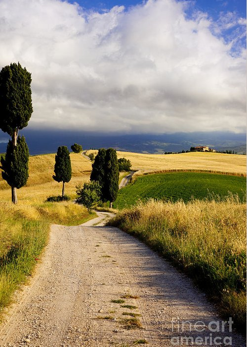 Cypress Greeting Card featuring the photograph Tuscany by Brian Jannsen