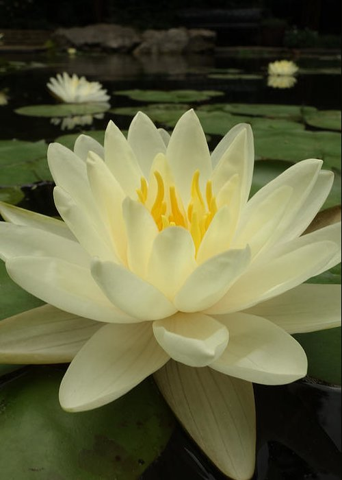 Flowers Greeting Card featuring the photograph Waterlily by Tinjoe Mbugus