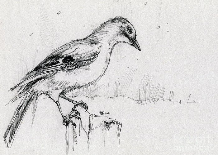 Jay Greeting Card featuring the drawing Wintery Tales by Angel Ciesniarska