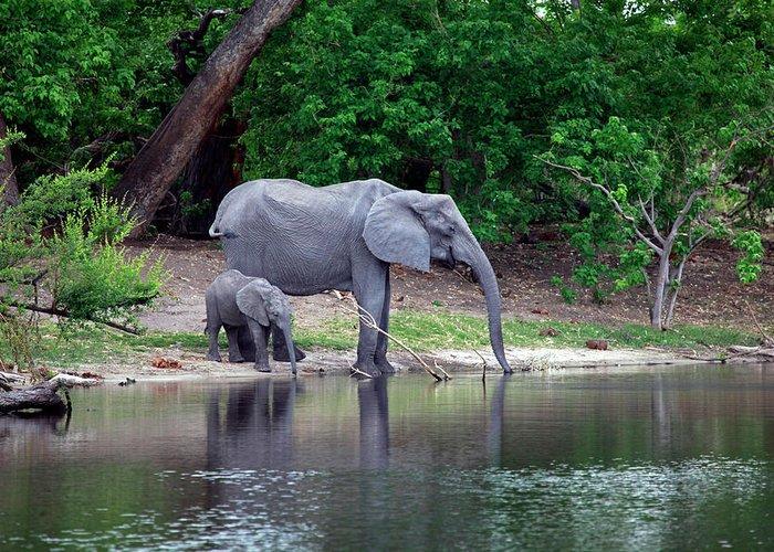 Africa Greeting Card featuring the photograph Botswana, Savute by Kymri Wilt