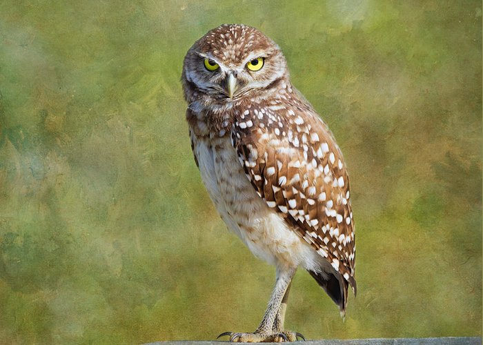 Wildlife Greeting Card featuring the photograph A Burrowing Owl by Kim Hojnacki