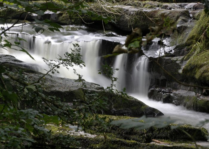 Clare Glens Greeting Card featuring the photograph Clare Glens by Brendan Gleeson