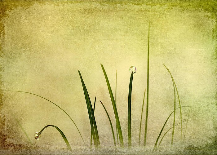 Abstract Greeting Card featuring the digital art Grass by Svetlana Sewell