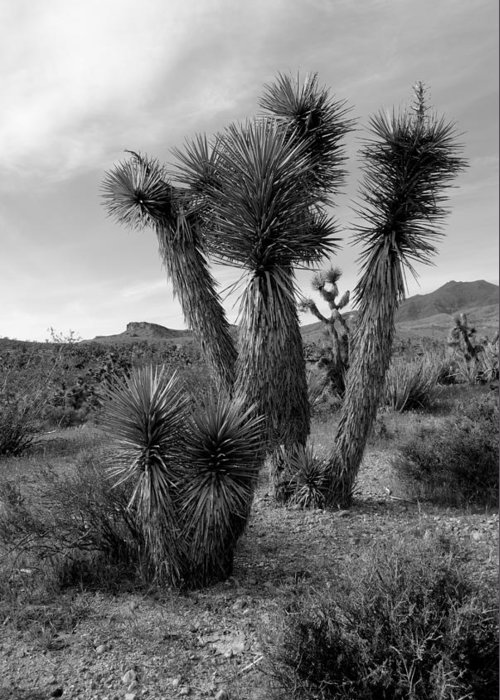Joshua Tree Greeting Card featuring the photograph Joshua Tree Utah by Nathan Abbott