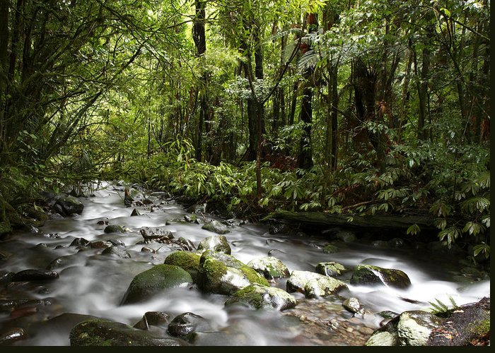 Stream Greeting Card featuring the photograph Jungle Stream by Les Cunliffe