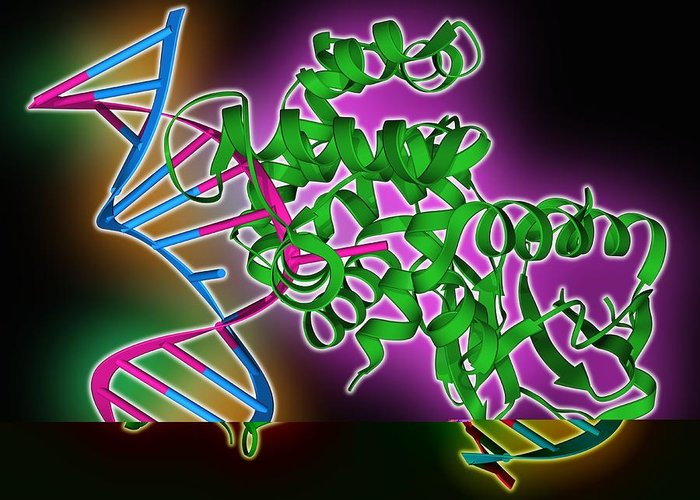 8-oxoguanine Glycosylase Greeting Card featuring the photograph Oxoguanine Glycosylase Complex by Science Photo Library