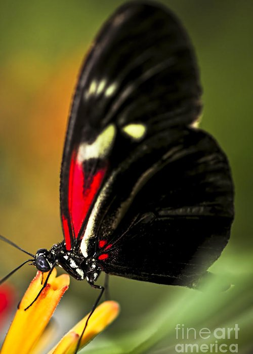 Heliconius Greeting Card featuring the photograph Red Heliconius Dora Butterfly by Elena Elisseeva
