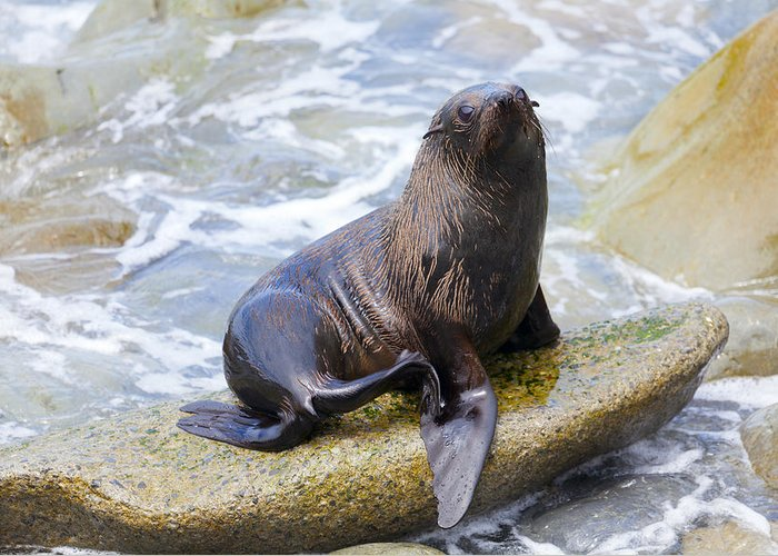 Sea Greeting Card featuring the photograph Sea Lion by Alexey Stiop