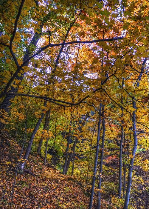Fall Greeting Card featuring the photograph Fall Leaves by Patrick Warneka