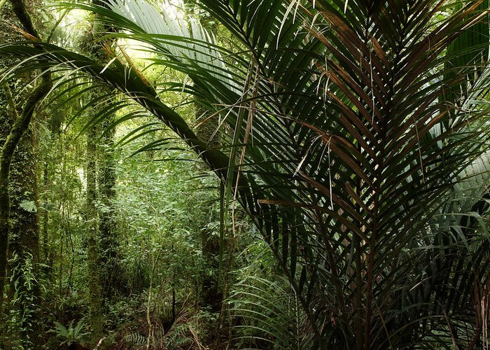 Botanical Greeting Card featuring the photograph Jungle by Les Cunliffe