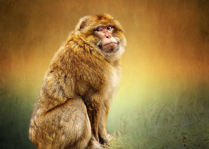 Monkey Greeting Card featuring the mixed media Monkey by Heike Hultsch