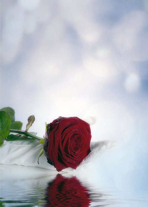 Hand Greeting Card featuring the photograph Red Rose by Joana Kruse