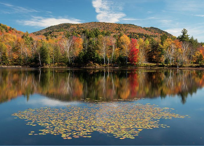 Autumn Leaf On Water Photographs Greeting Cards