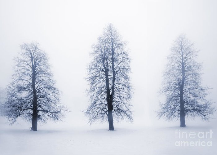 Trees Greeting Card featuring the photograph Winter Trees In Fog by Elena Elisseeva