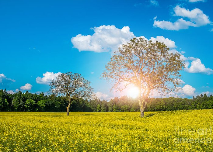 Yellow Greeting Card featuring the photograph Yellow Field by Sabino Parente