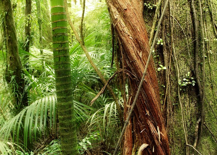 Forest Greeting Card featuring the photograph Jungle by Les Cunliffe