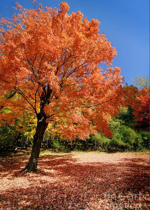 Autumn Greeting Card featuring the photograph A Blanket Of Fall Colors by Amy Cicconi