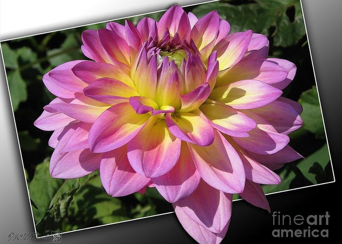 Dahlia Greeting Card featuring the painting Dahlia Named Jowey Gipsy by J McCombie