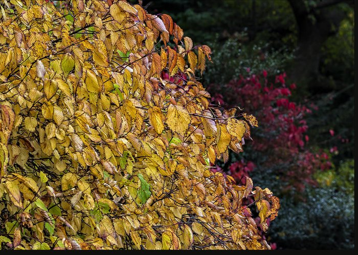 Fall Greeting Card featuring the photograph Fall Foliage by Robert Ullmann