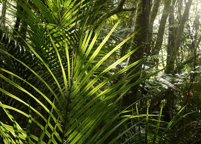 Rain Forest Greeting Card featuring the photograph Jungle Light by Les Cunliffe