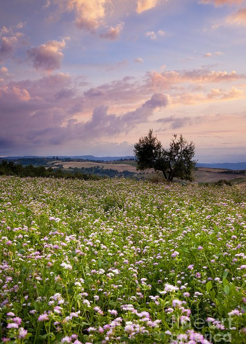 Field Greeting Card featuring the photograph Tuscany by Brian Jannsen