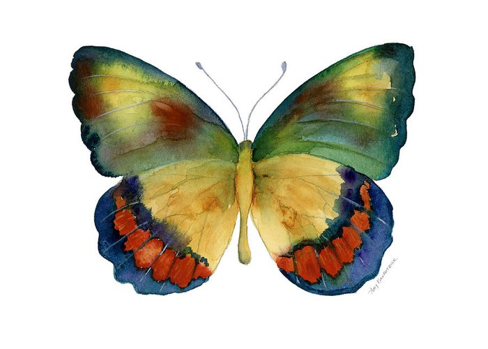 Bagoe Butterfly Greeting Card featuring the painting 67 Bagoe Butterfly by Amy Kirkpatrick