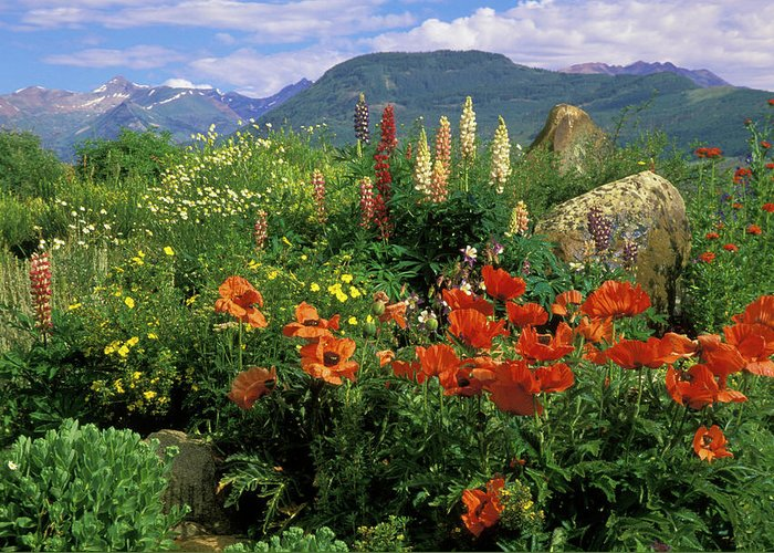 Colorado Greeting Card featuring the photograph Usa, Colorado, Crested Butte by Jaynes Gallery