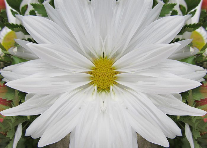 Flowers Greeting Card featuring the photograph Daisy Dream by Michele Caporaso
