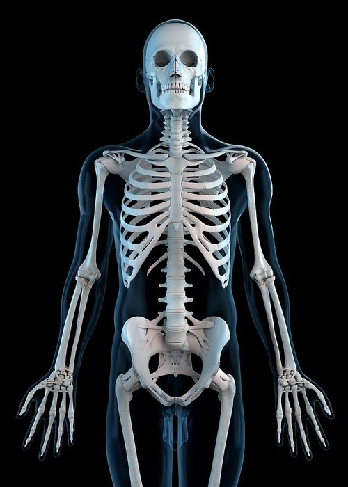 Physiology Greeting Card featuring the digital art Human Skeleton, Artwork by Sciepro