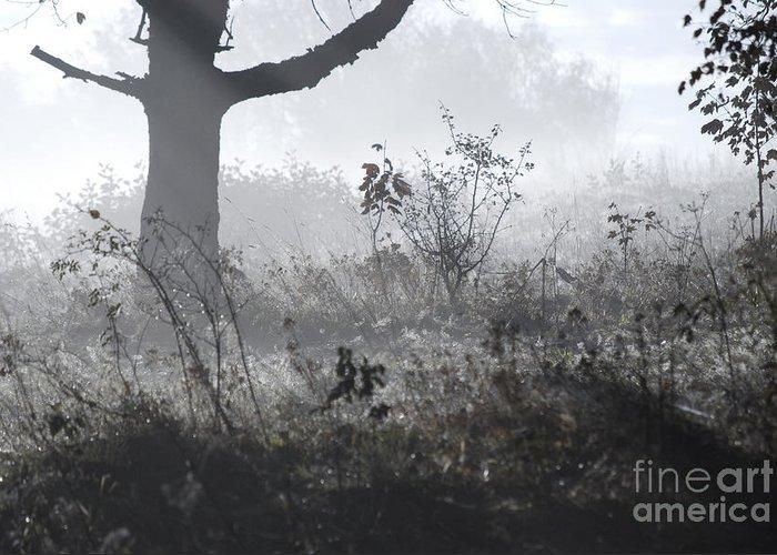 Mist Greeting Card featuring the photograph Morning Mist by Sarka Olehlova