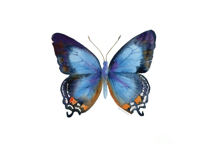 Imperial Blue Butterfly Greeting Card featuring the painting 80 Imperial Blue Butterfly by Amy Kirkpatrick