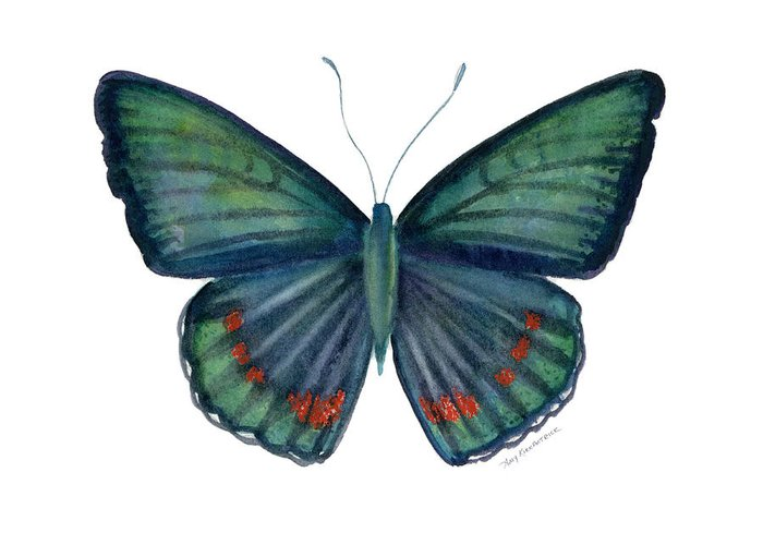 Teal Green Butterfly Greeting Card featuring the painting 82 Bellona Butterfly by Amy Kirkpatrick