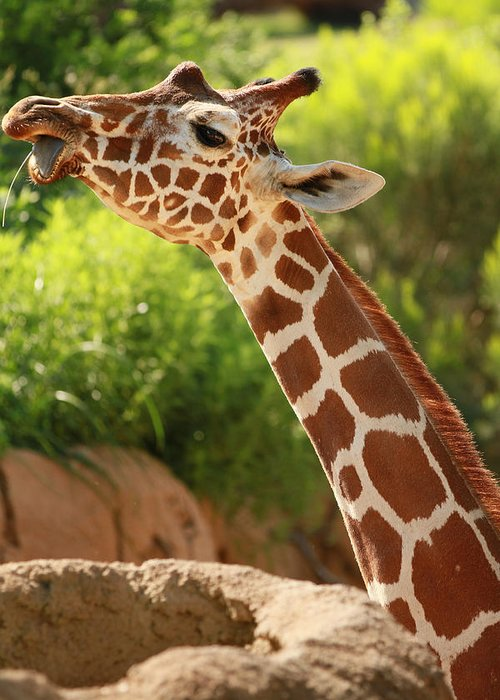 Nature Greeting Card featuring the photograph Giraff by Tinjoe Mbugus