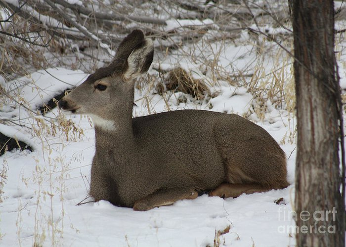 Deer Greeting Card featuring the photograph A Bed Of Snow by Brandi Maher