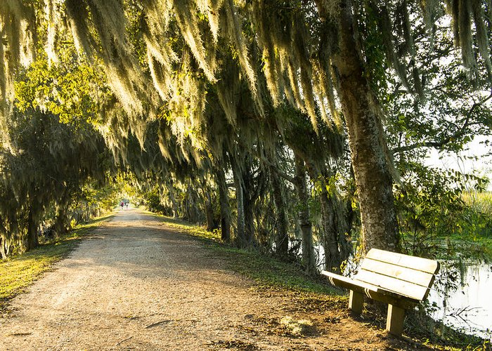 Brazos Bend State Park Greeting Cards