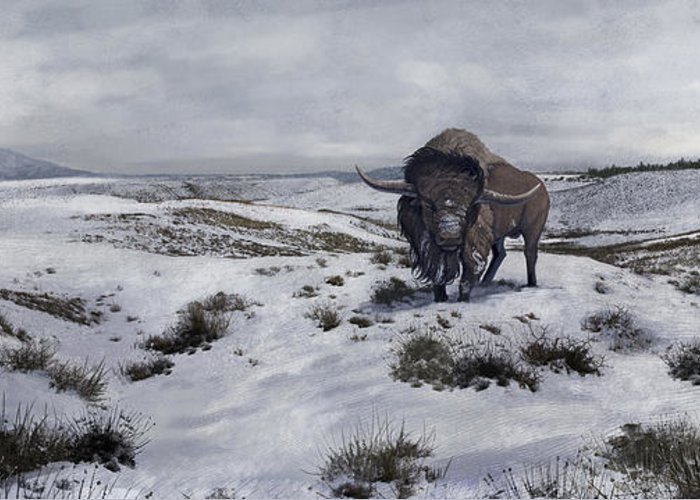 Color Image Greeting Card featuring the digital art A Bison Latifrons In A Winter Landscape by Roman Garcia Mora