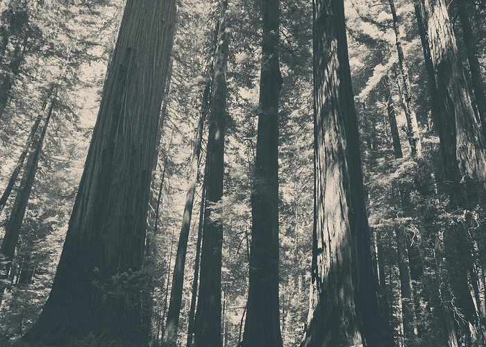 Humboldt Redwoods State Park Greeting Card featuring the photograph A Breath Of Fresh Air by Laurie Search