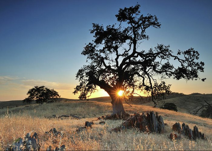Back Lit Greeting Card featuring the photograph A Bright Orange Sun Peaking by Keith Ladzinski