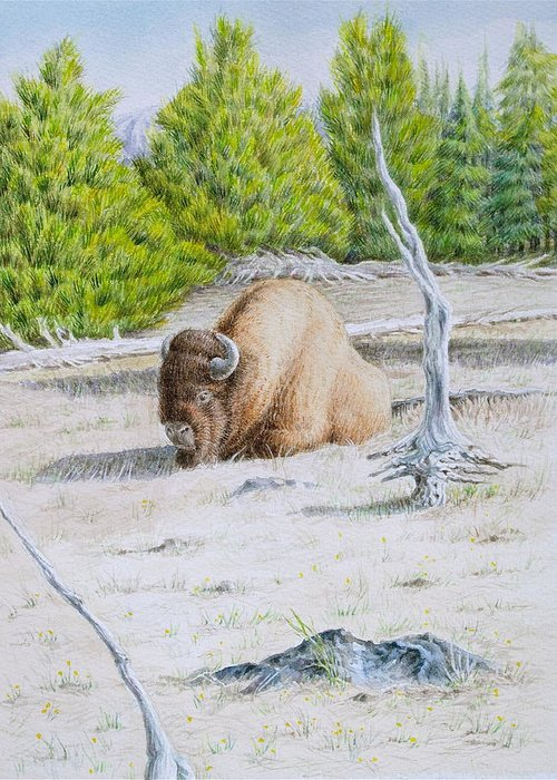 Buffalo Greeting Card featuring the painting A Buffalo Sits In Yellowstone by Michele Myers