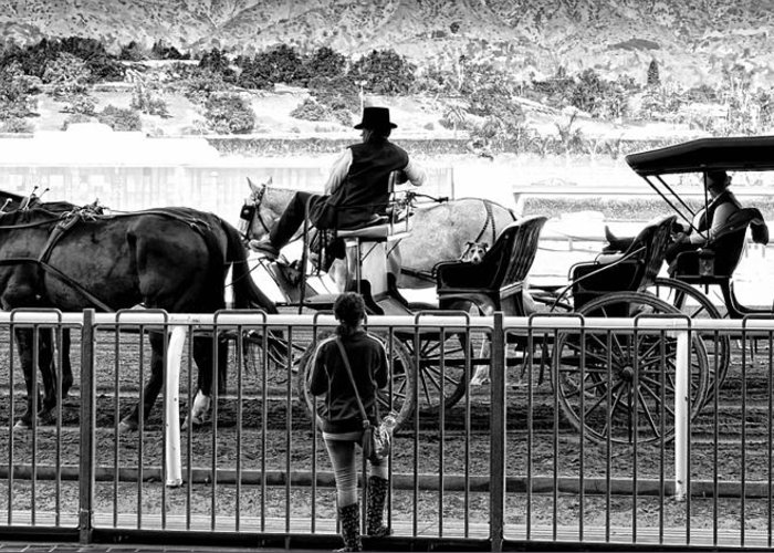 Horse Greeting Card featuring the photograph A Casual Observer by Camille Lopez