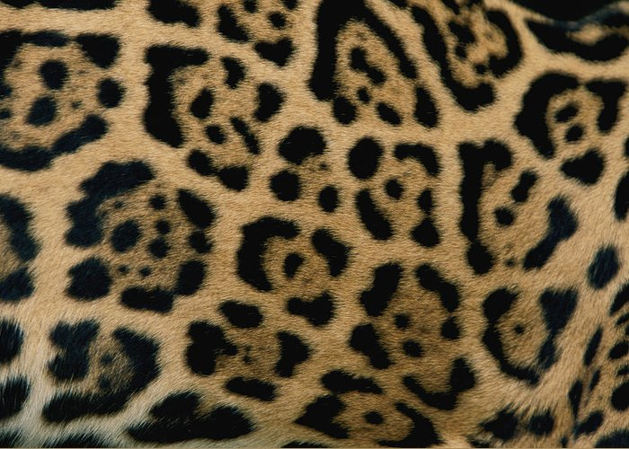 jaguars Greeting Card featuring the photograph A Close View Of The Markings by Steve Winter