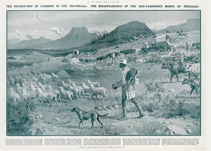 A country scene in south africa boer greeting card for sale by rural greeting card featuring the drawing a country scene in south africa boer by illustrated m4hsunfo
