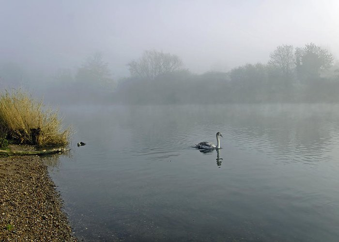 Burton On Trent Greeting Card featuring the photograph A Cygnet In The Fog by Rod Johnson