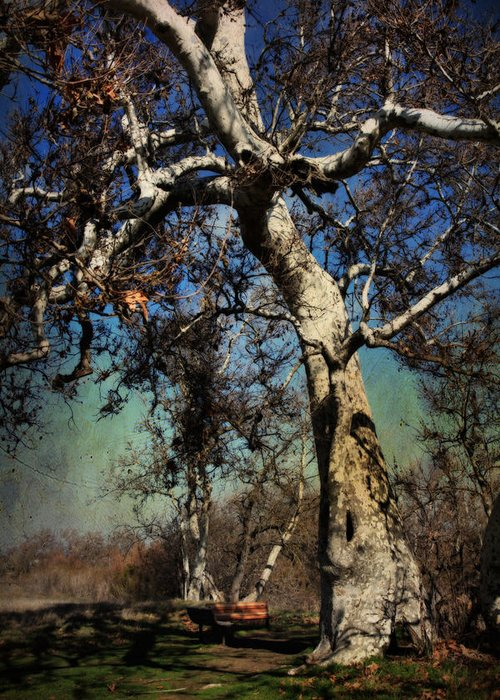 Sycamore Grove Park Greeting Card featuring the photograph A Day Like This by Laurie Search