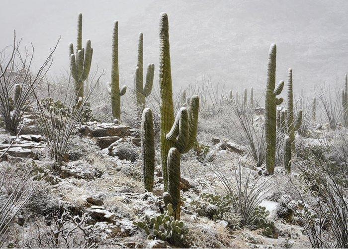Arizona Greeting Card featuring the photograph A Desert Blizzard by Saija Lehtonen