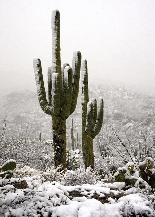 Arizona Greeting Card featuring the photograph A Desert Southwest Snow Day by Saija Lehtonen