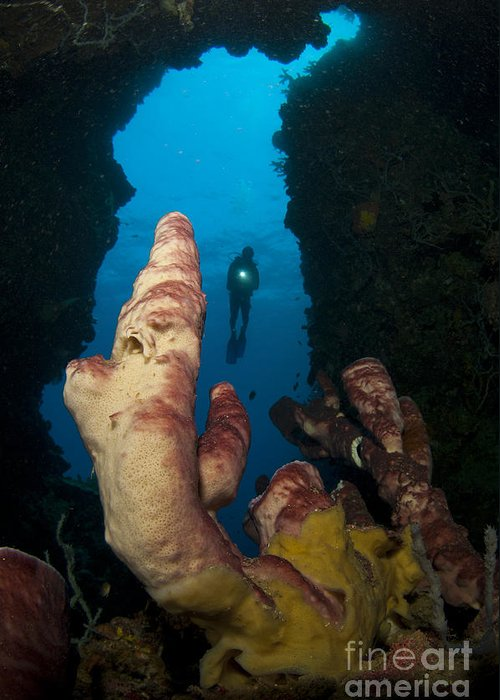 Cavern Greeting Card featuring the photograph A Diver Looks Into A Cavern by Steve Jones