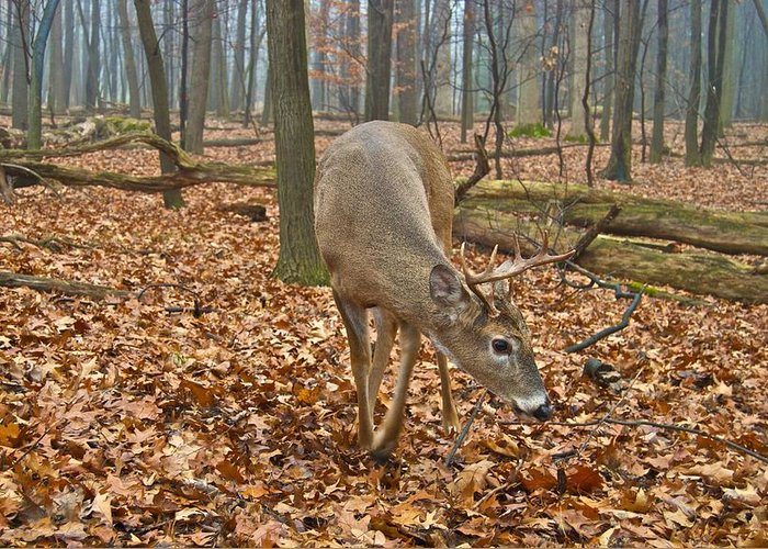 Animal Greeting Card featuring the photograph A Eight Point Buck 1261 by Michael Peychich