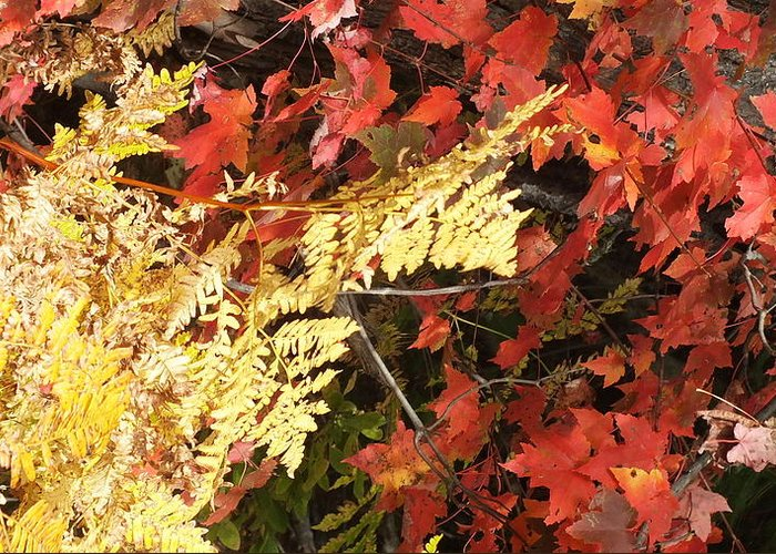 Gold Greeting Card featuring the photograph A Fall Day In New Hampshire by Kathleen Heseltine